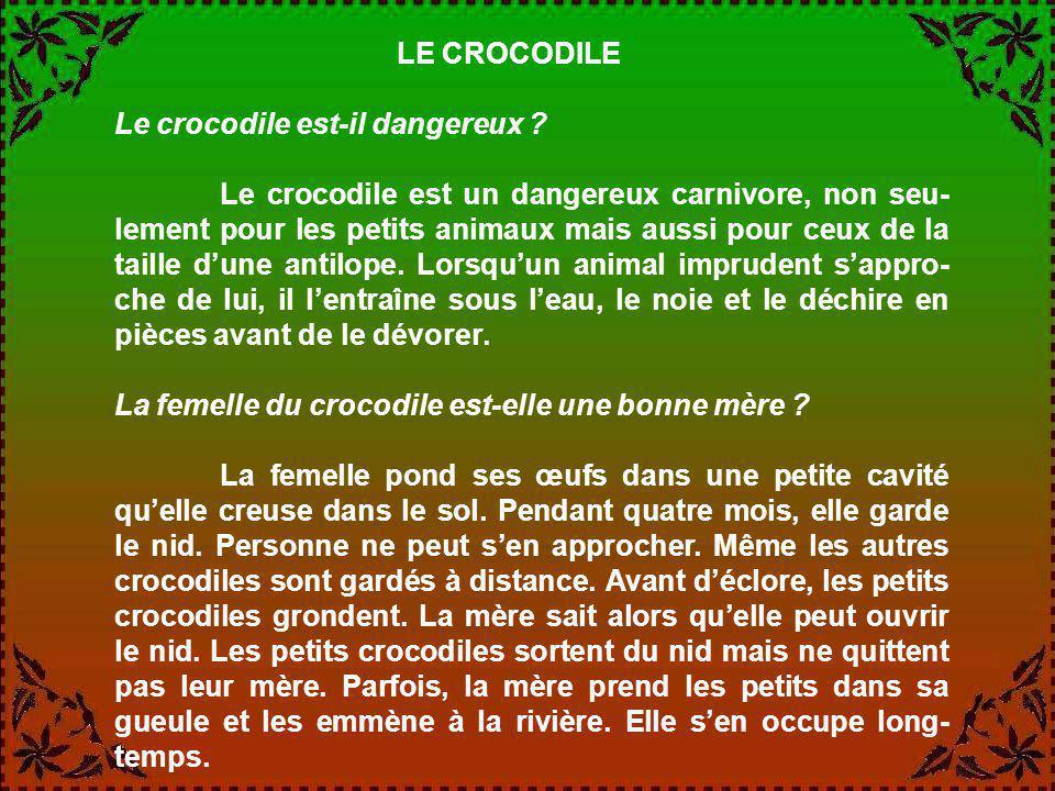 LE CROCODILE Le crocodile est-il dangereux