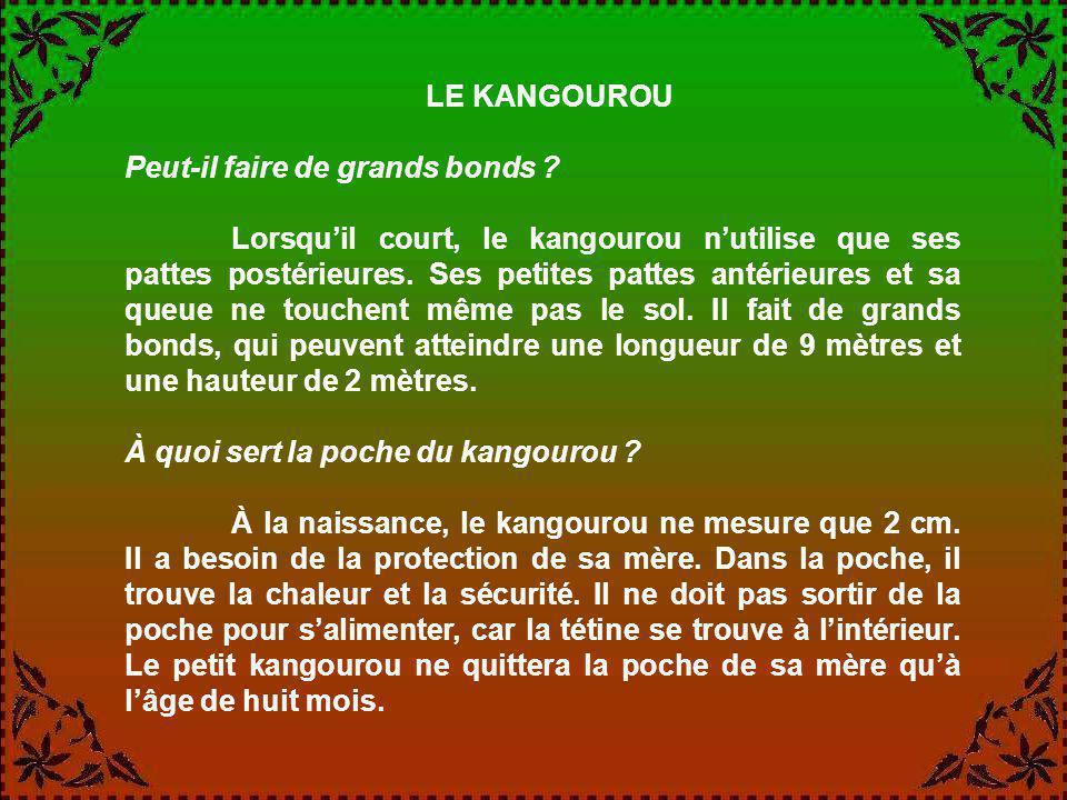 LE KANGOUROU Peut-il faire de grands bonds