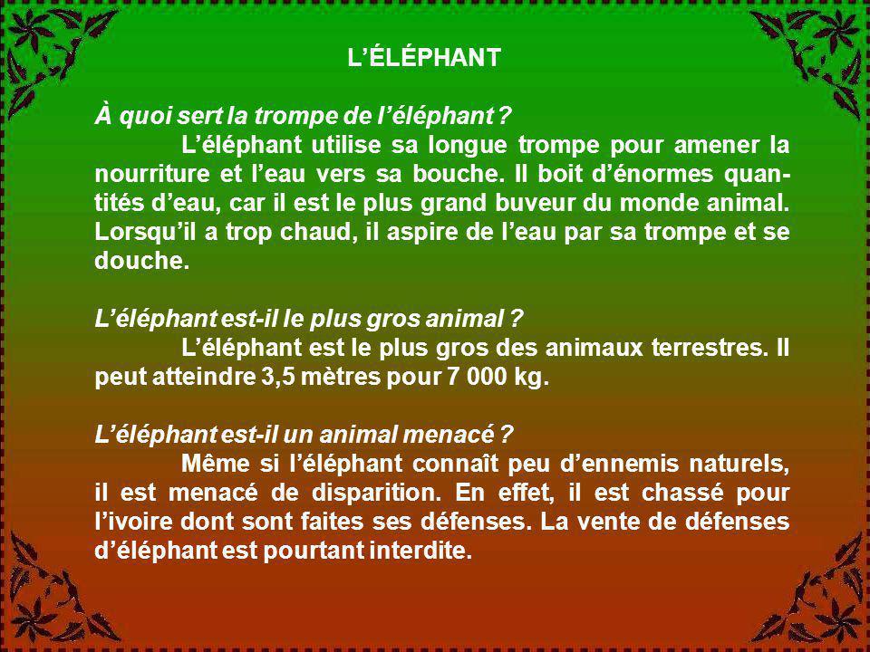 L'ÉLÉPHANT À quoi sert la trompe de l'éléphant