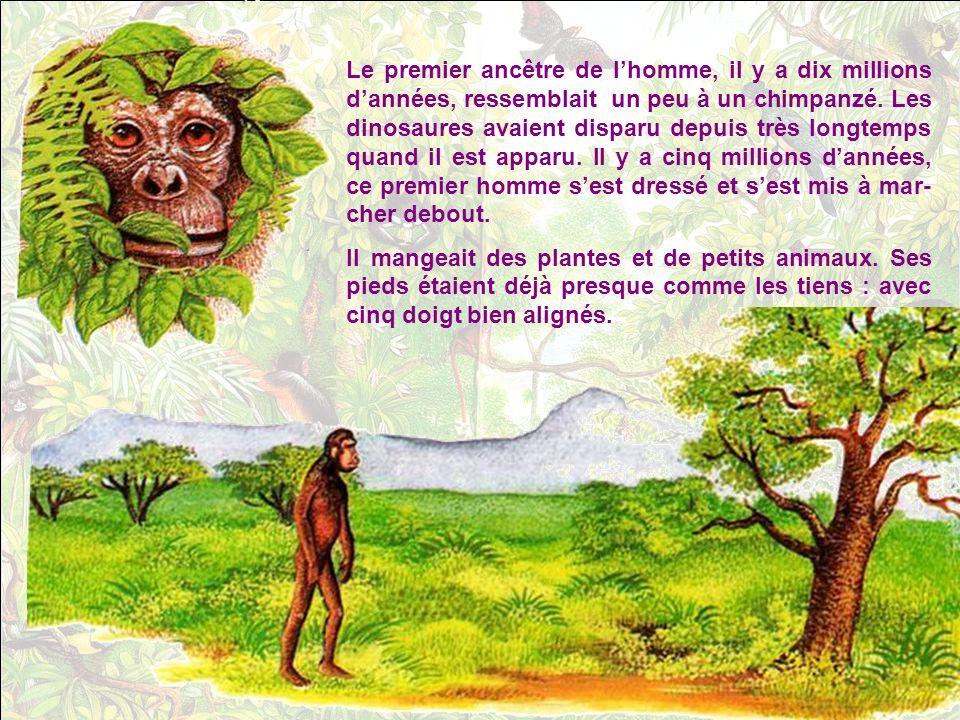 Le premier ancêtre de l'homme, il y a dix millions d'années, ressemblait un peu à un chimpanzé. Les dinosaures avaient disparu depuis très longtemps quand il est apparu. Il y a cinq millions d'années, ce premier homme s'est dressé et s'est mis à mar-cher debout.