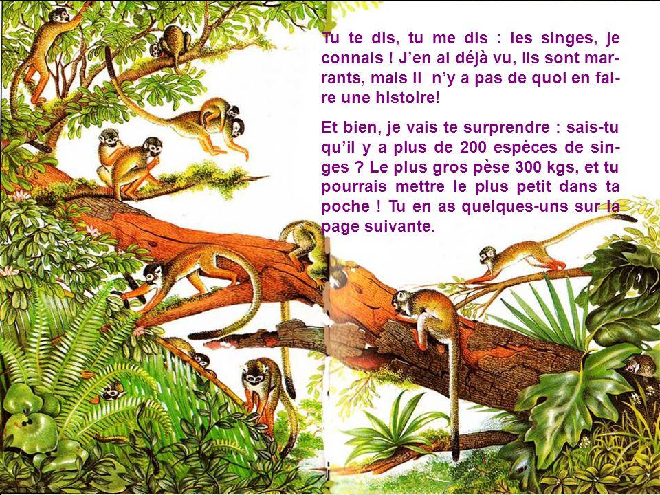 Tu te dis, tu me dis : les singes, je connais