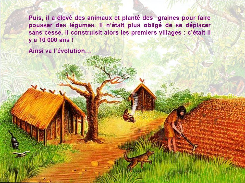 Puis, il a élevé des animaux et planté des graines pour faire pousser des légumes. Il n'était plus obligé de se déplacer sans cesse. Il construisit alors les premiers villages : c'était il y a 10 000 ans !