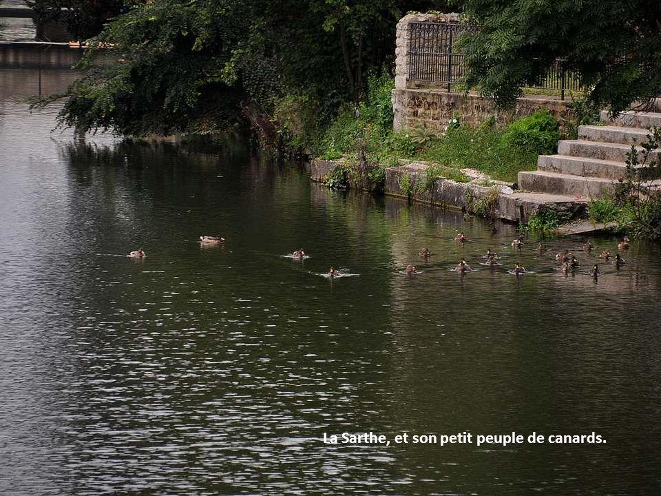 La Sarthe, et son petit peuple de canards.