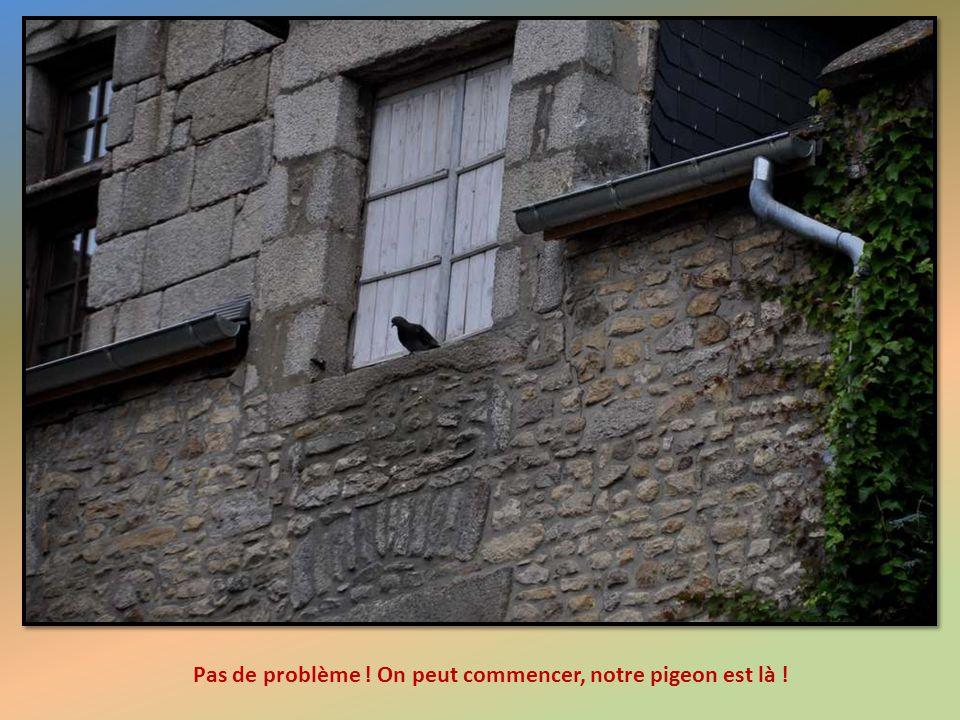 Pas de problème ! On peut commencer, notre pigeon est là !