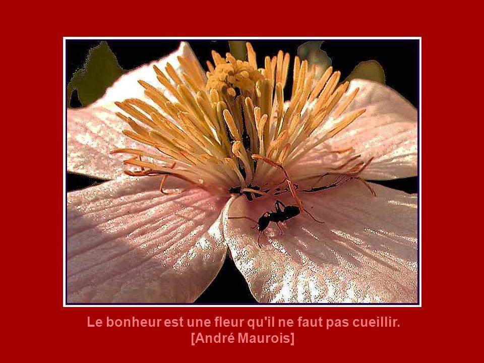 Le bonheur est une fleur qu il ne faut pas cueillir.