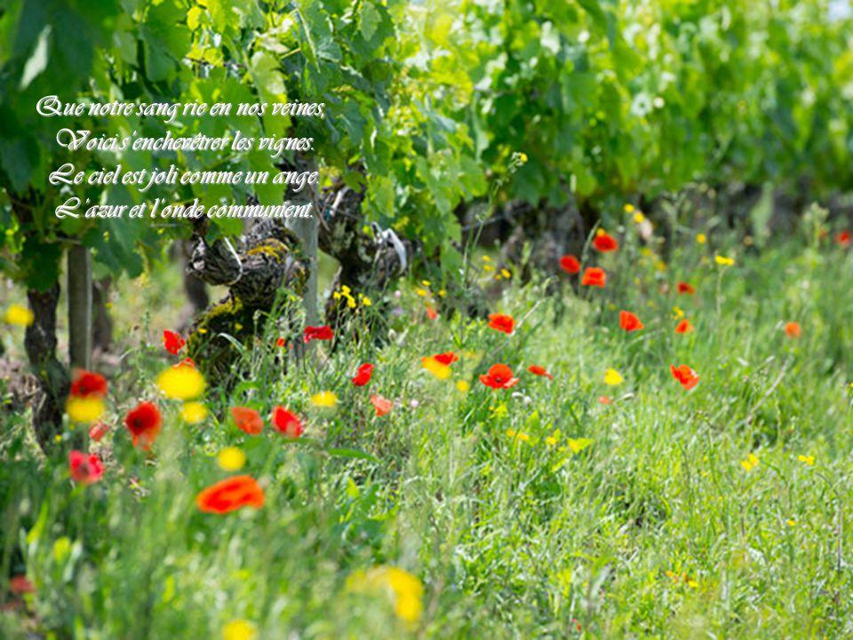 Que notre sang rie en nos veines, Voici s'enchevêtrer les vignes.