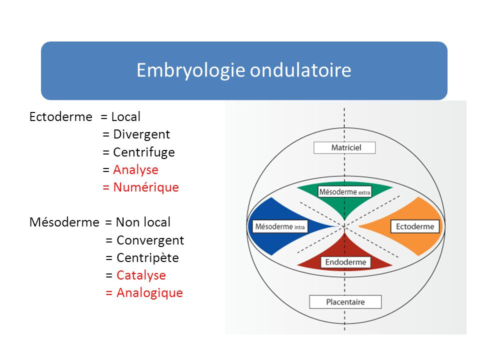 Embryologie ondulatoire