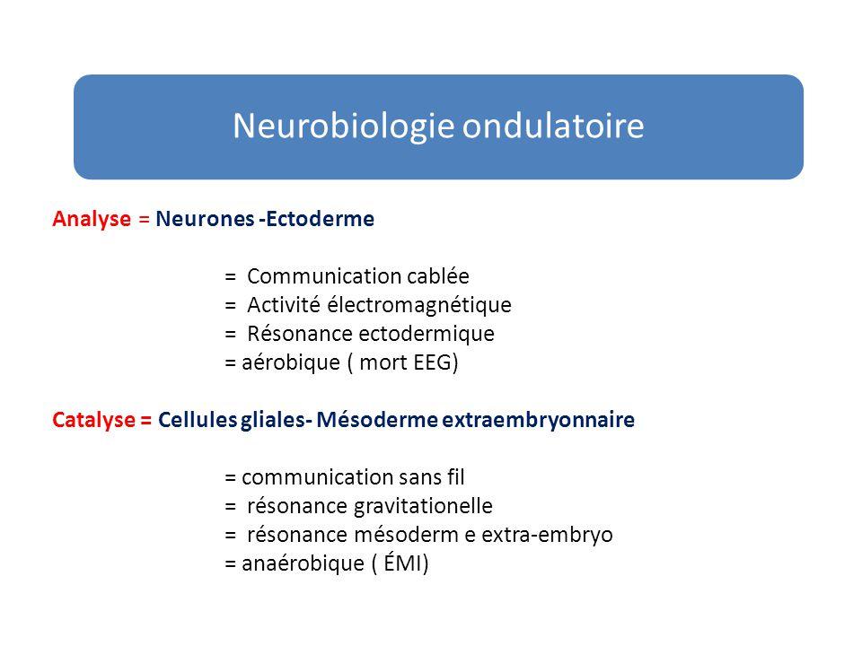 Neurobiologie ondulatoire
