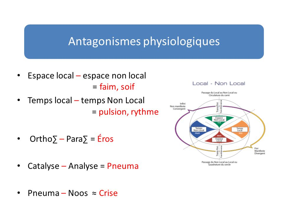 Antagonismes physiologiques