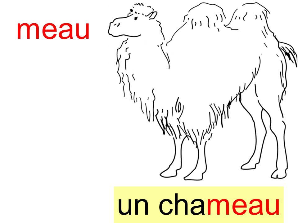 chameau meau un chameau instit90