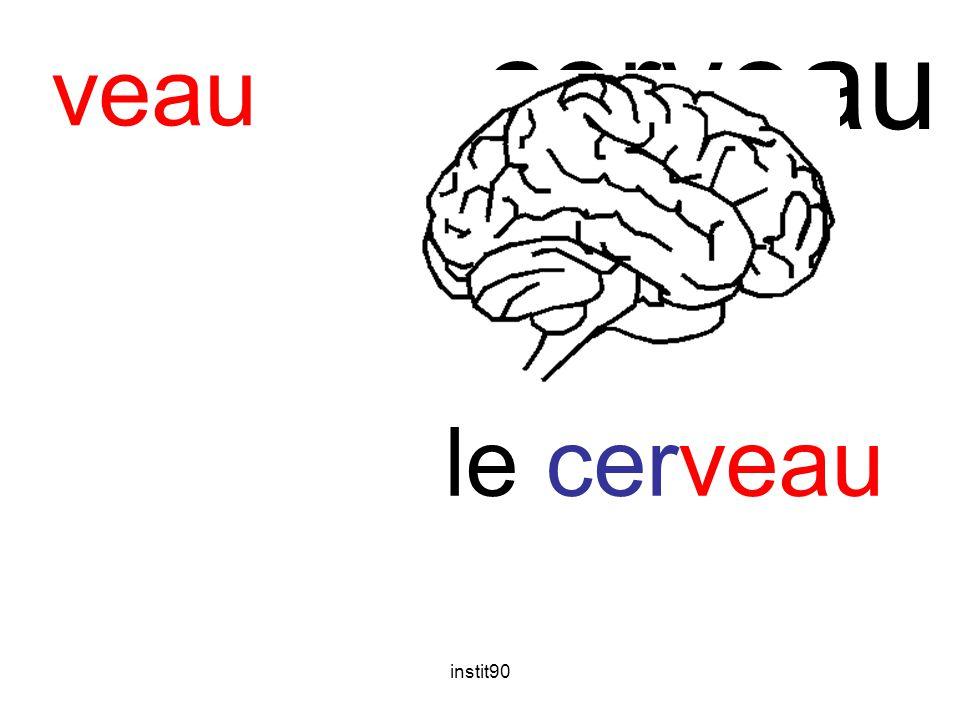 cerveau veau le cerveau instit90