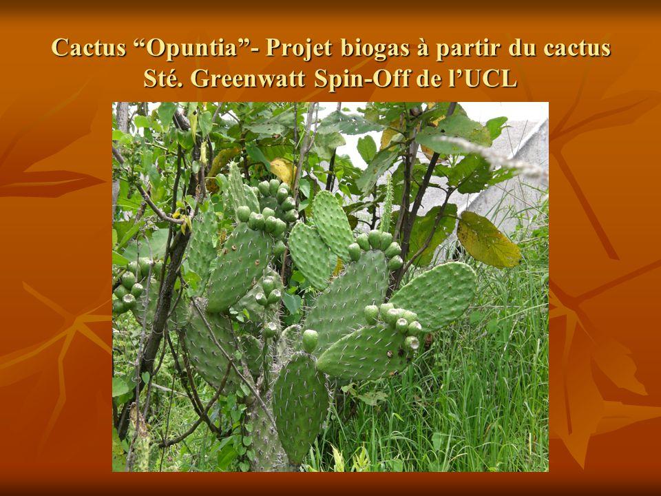 Cactus Opuntia - Projet biogas à partir du cactus Sté