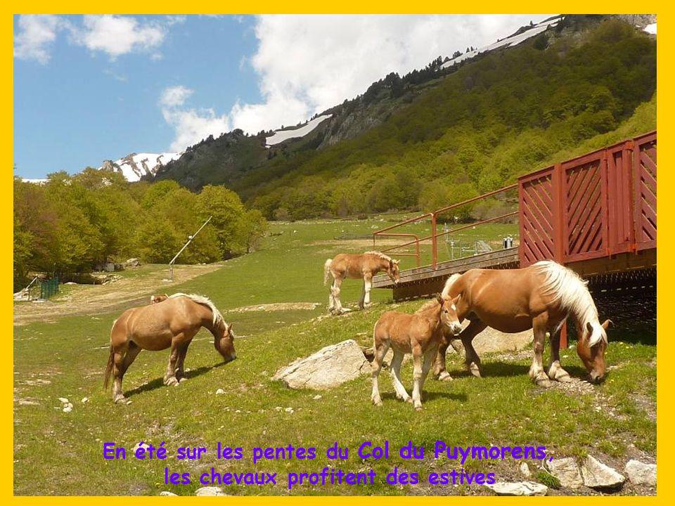En été sur les pentes du Col du Puymorens, les chevaux profitent des estives