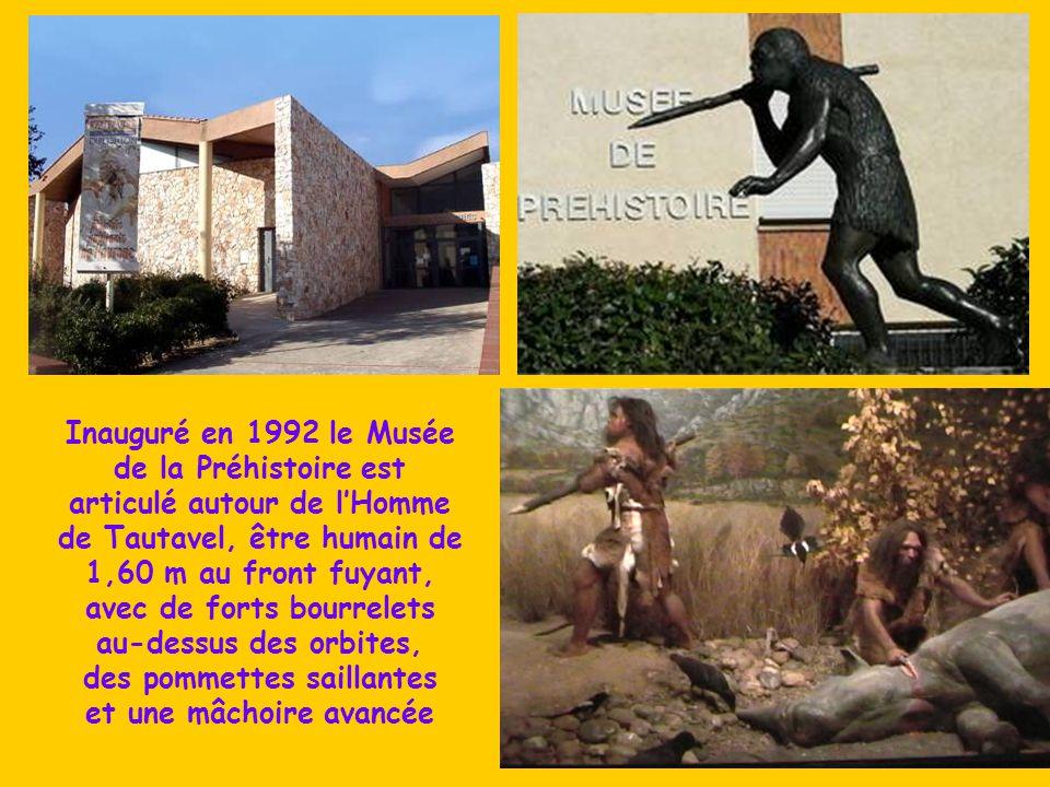 Inauguré en 1992 le Musée de la Préhistoire est articulé autour de l'Homme de Tautavel, être humain de 1,60 m au front fuyant, avec de forts bourrelets au-dessus des orbites, des pommettes saillantes et une mâchoire avancée