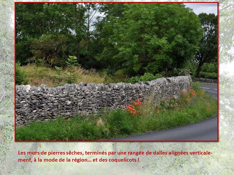 Les murs de pierres sêches, terminés par une rangée de dalles alignées verticale-ment, à la mode de la région… et des coquelicots !