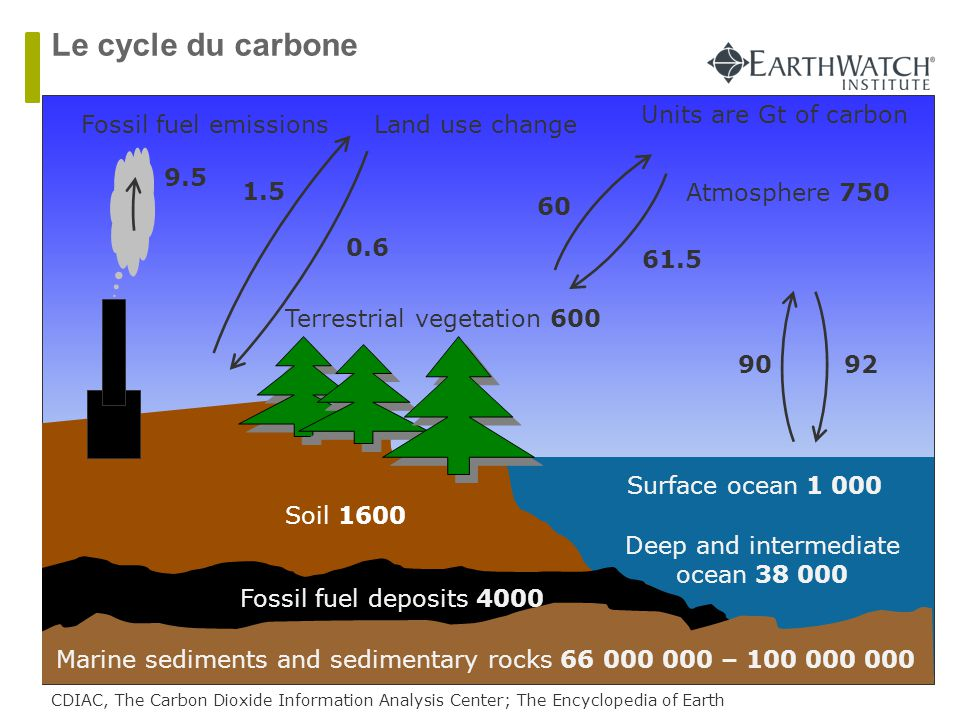 Le cycle du carbone Units are Gt of carbon Fossil fuel emissions