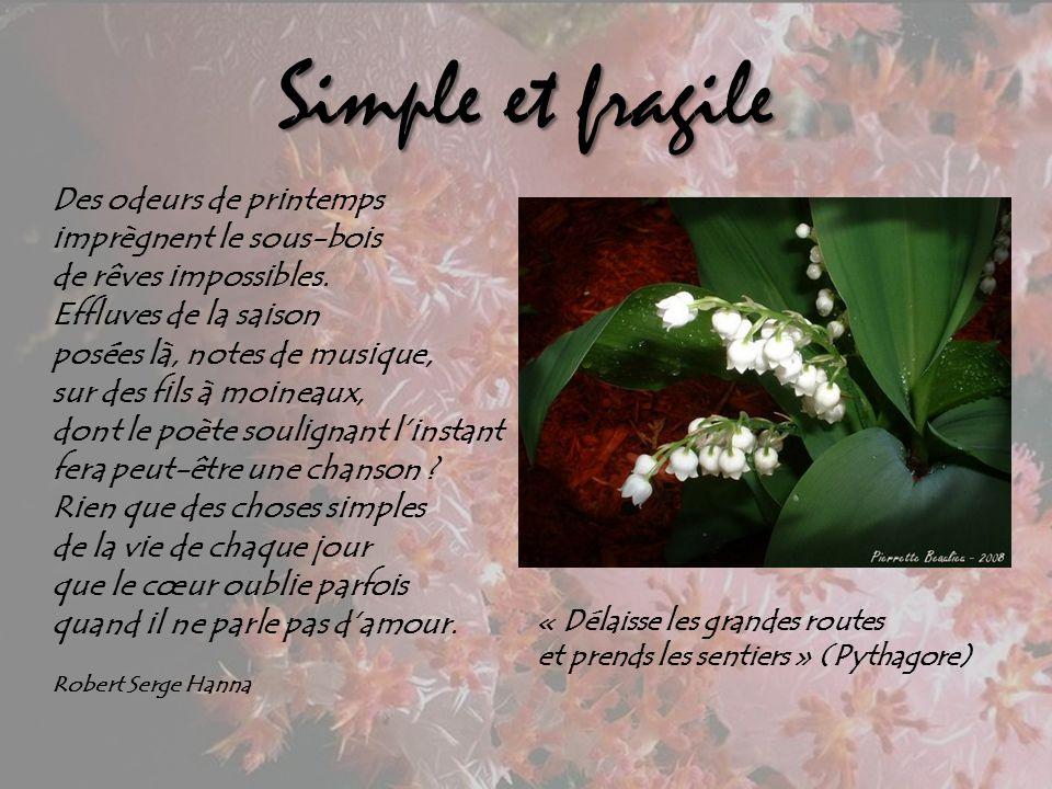 Simple et fragile Des odeurs de printemps imprègnent le sous-bois