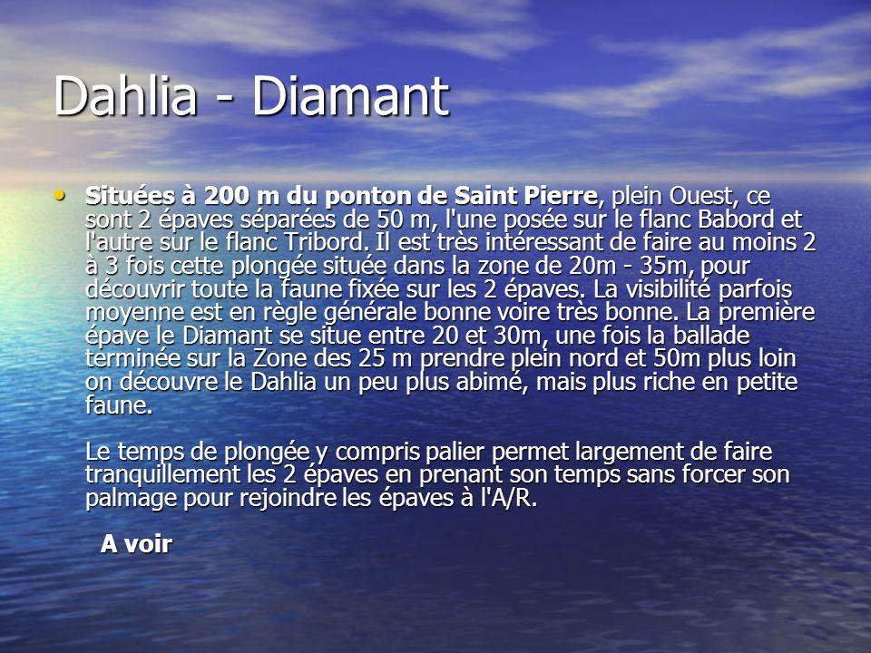 Dahlia - Diamant