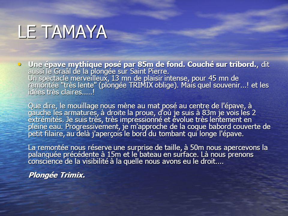 LE TAMAYA