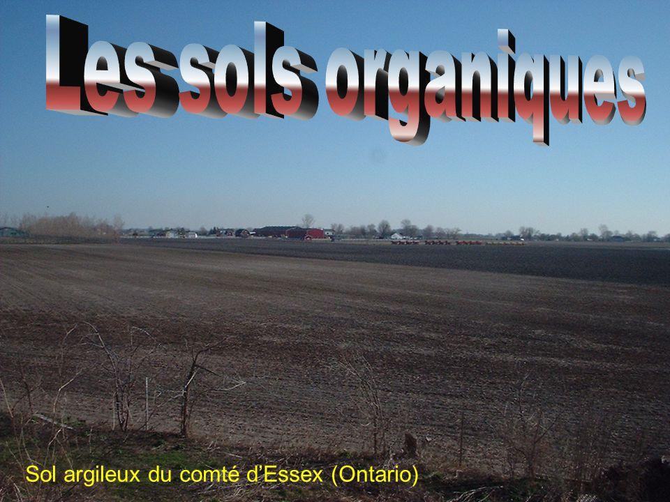 Les sols organiques Sol argileux du comté d'Essex (Ontario)