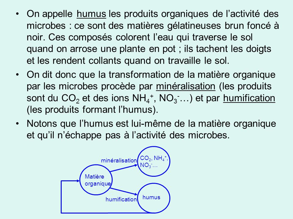 On appelle humus les produits organiques de l'activité des microbes : ce sont des matières gélatineuses brun foncé à noir. Ces composés colorent l'eau qui traverse le sol quand on arrose une plante en pot ; ils tachent les doigts et les rendent collants quand on travaille le sol.