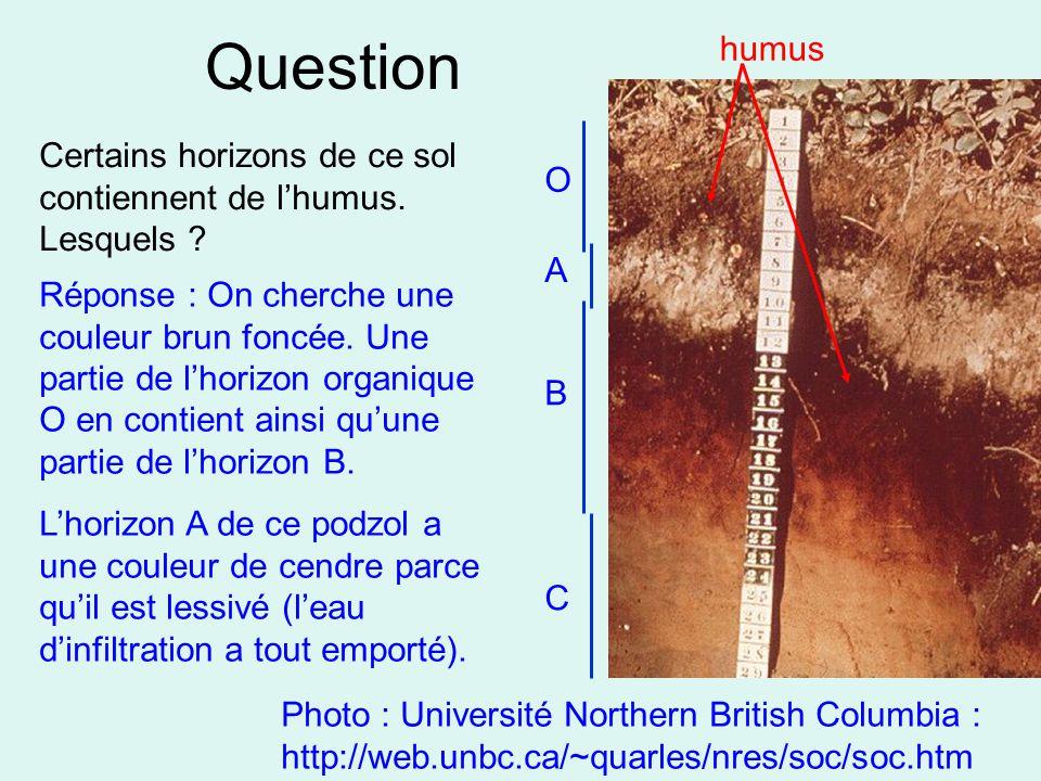 Question humus. Certains horizons de ce sol contiennent de l'humus. Lesquels O. A.