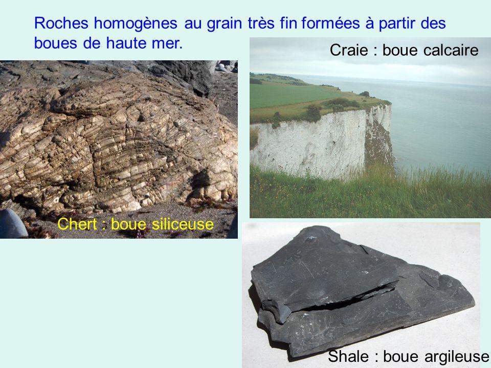 Roches homogènes au grain très fin formées à partir des boues de haute mer.