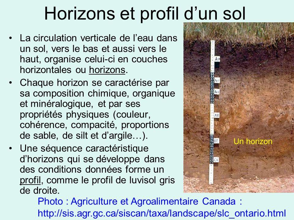 Horizons et profil d'un sol