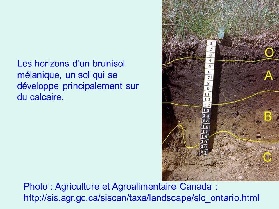 Les horizons d'un brunisol mélanique, un sol qui se développe principalement sur du calcaire.