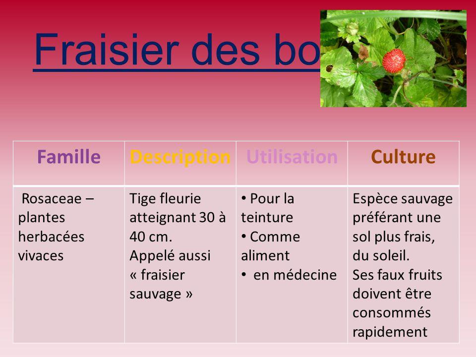 Fraisier des bois Famille Description Utilisation Culture