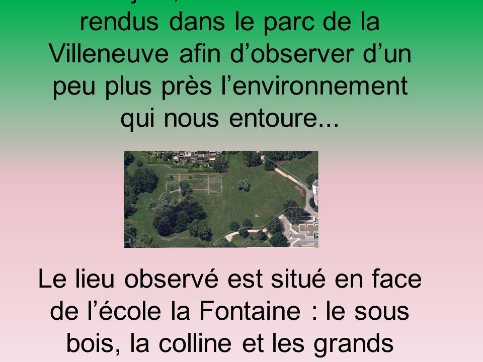 Jeudi 4 juin, nous nous sommes rendus dans le parc de la Villeneuve afin d'observer d'un peu plus près l'environnement qui nous entoure...