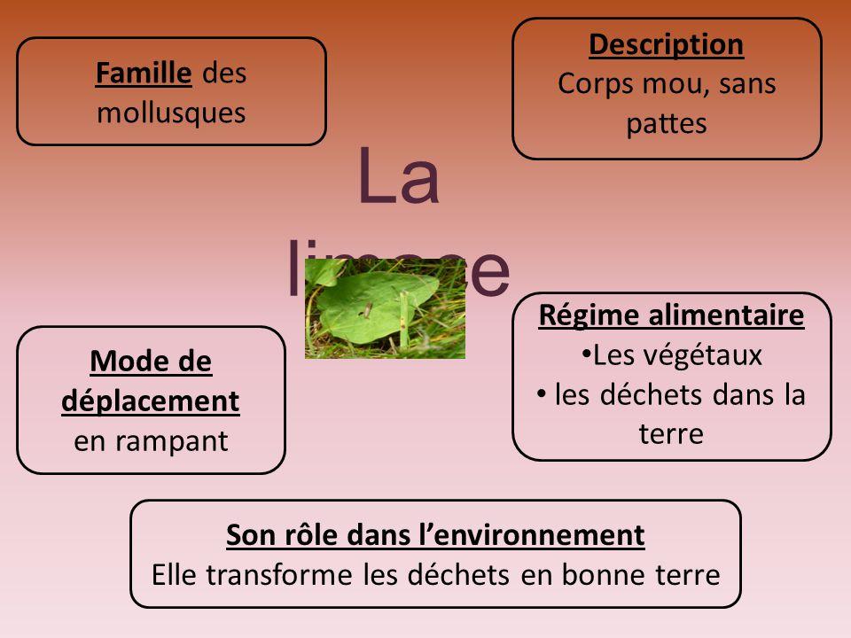 Son rôle dans l'environnement