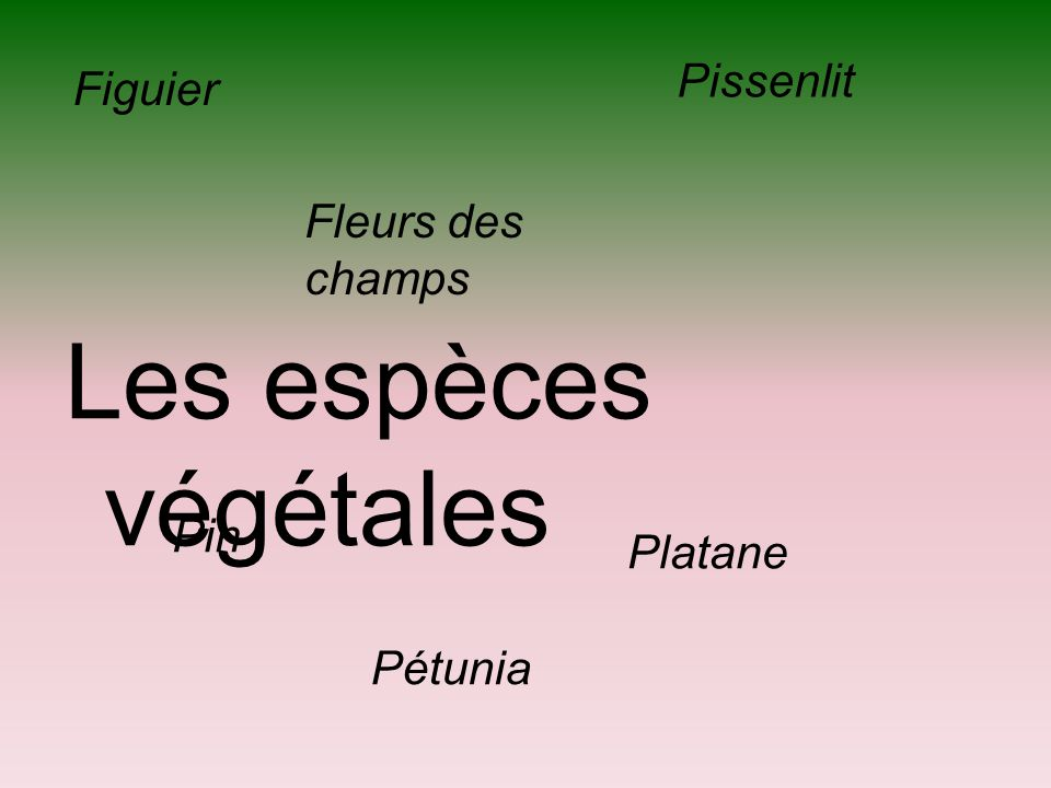 Les espèces végétales Pissenlit Figuier Fleurs des champs Pin Platane