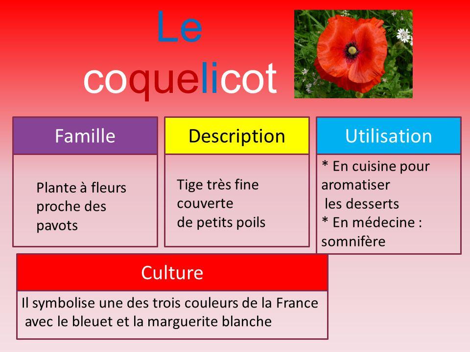 Le coquelicot Famille Description Utilisation Culture