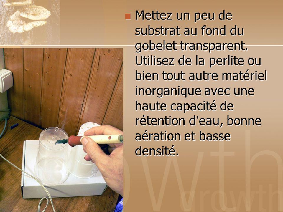 Mettez un peu de substrat au fond du gobelet transparent