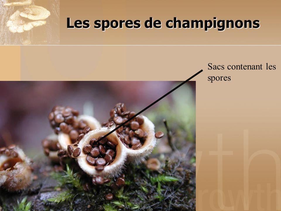 Les spores de champignons