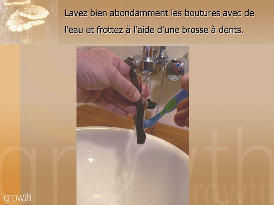 Lavez bien abondamment les boutures avec de l'eau et frottez à l'aide d'une brosse à dents.