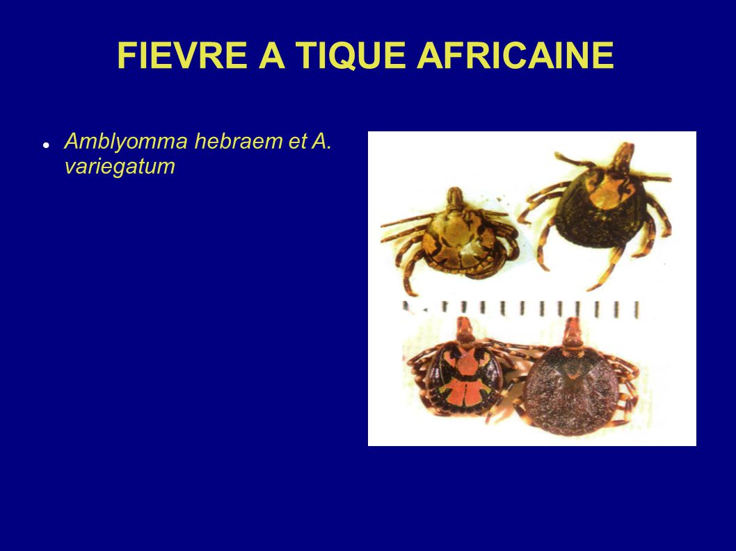FIEVRE A TIQUE AFRICAINE