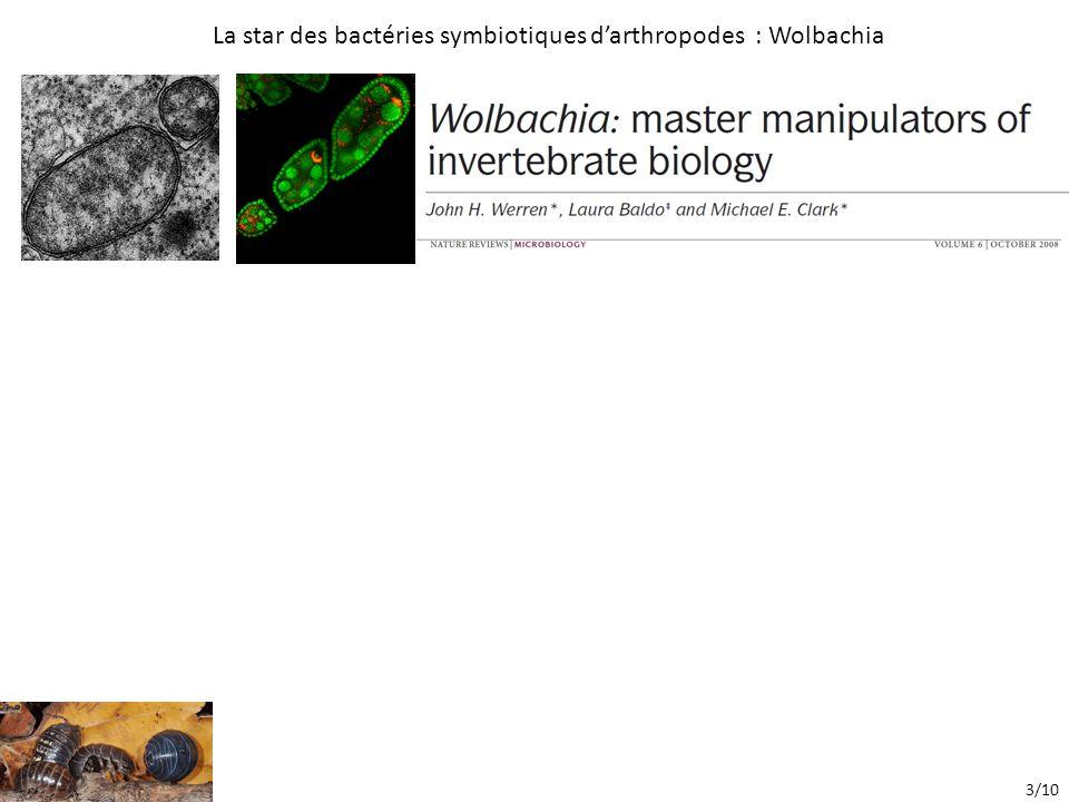 La star des bactéries symbiotiques d'arthropodes : Wolbachia