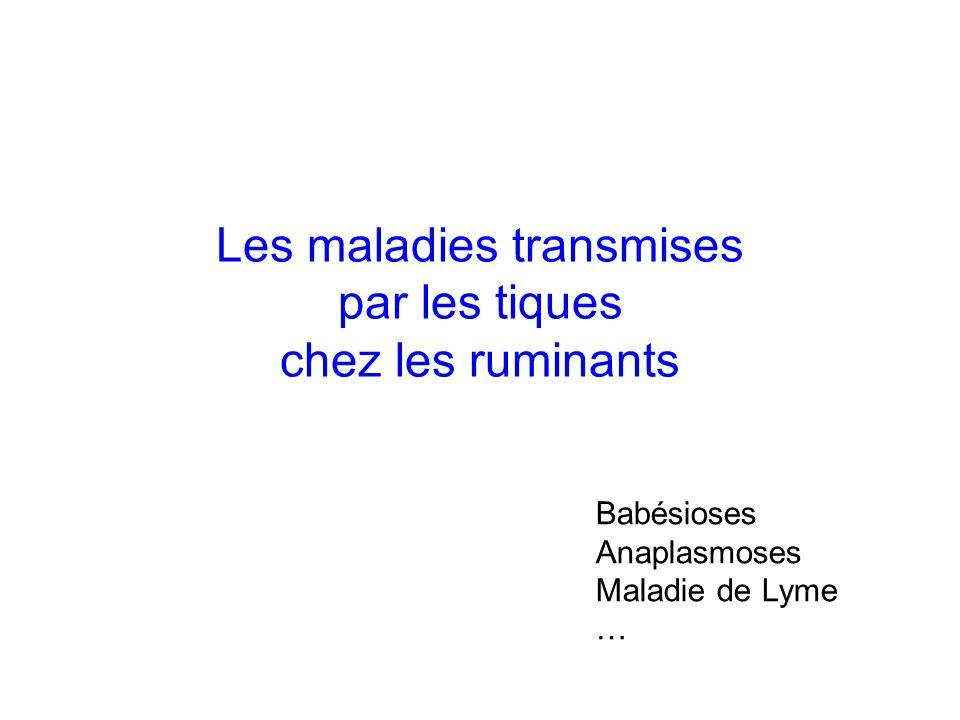 Les maladies transmises par les tiques chez les ruminants