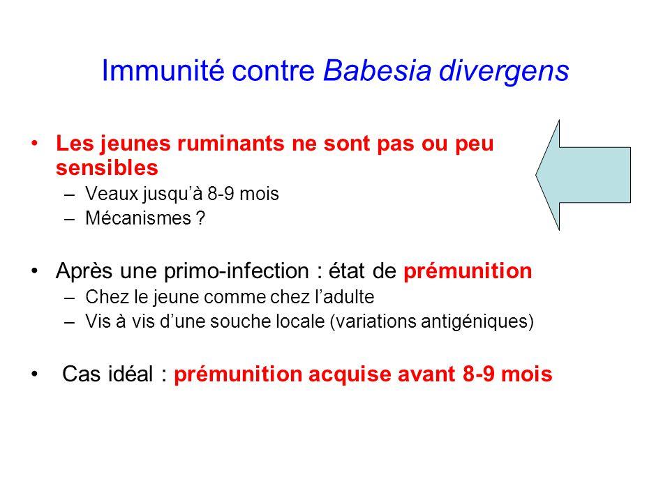 Immunité contre Babesia divergens