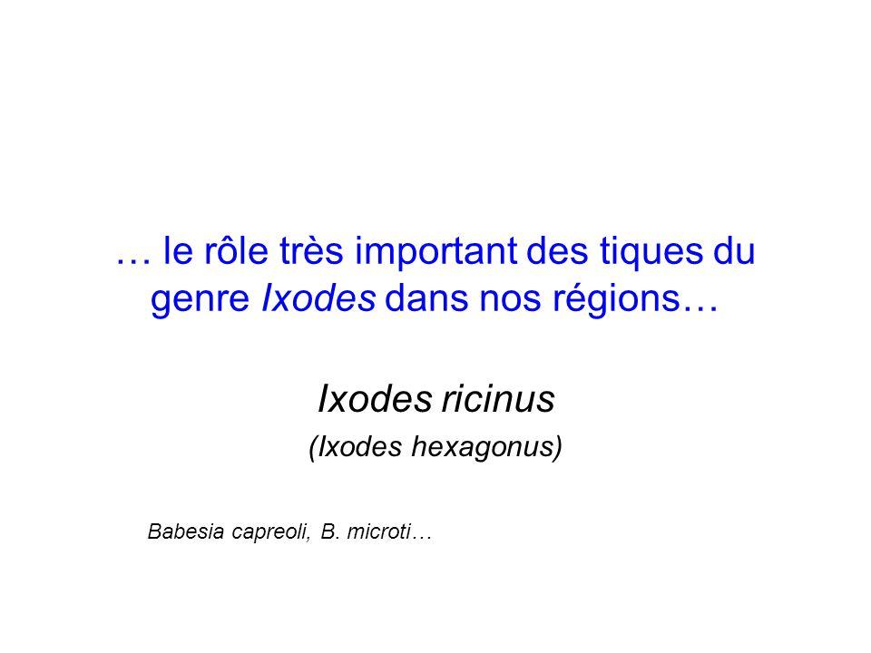 … le rôle très important des tiques du genre Ixodes dans nos régions…