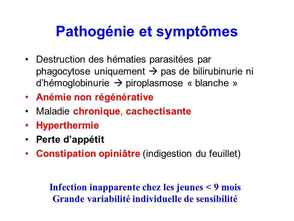 Pathogénie et symptômes