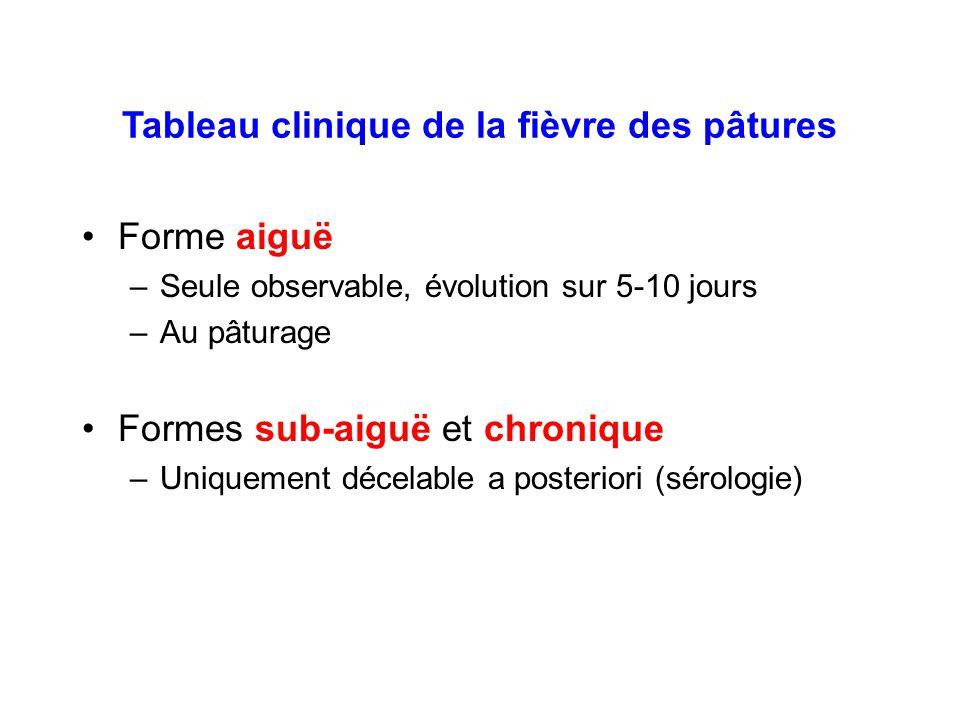Tableau clinique de la fièvre des pâtures