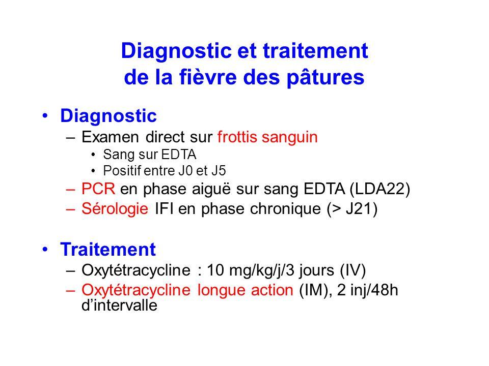 Diagnostic et traitement de la fièvre des pâtures