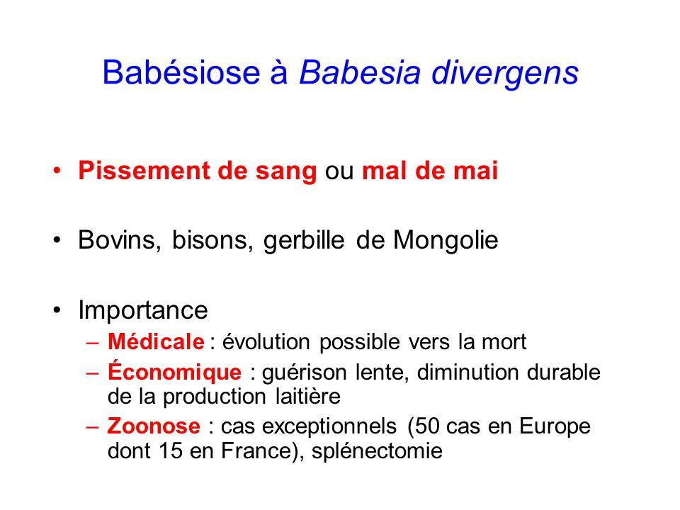 Babésiose à Babesia divergens