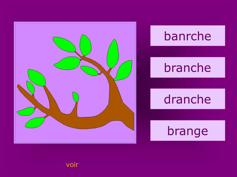 29. branche banrche branche dranche brange voir