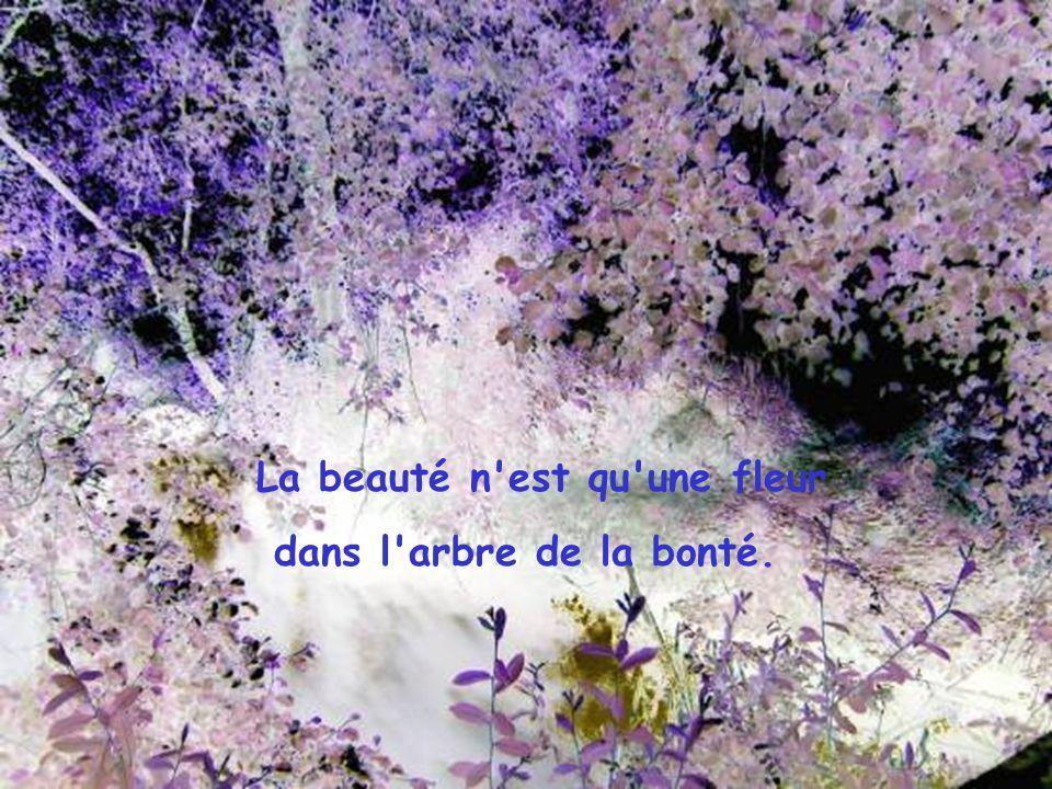La beauté n est qu une fleur