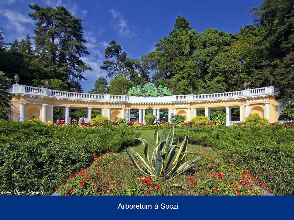 Arboretum à Soczi