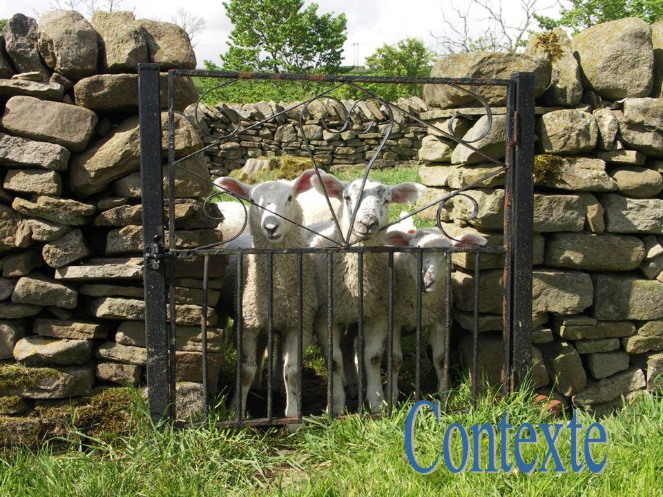 A l'époque où Jésus parle, les moutons étaient gardés différemment en ville et en campagne.